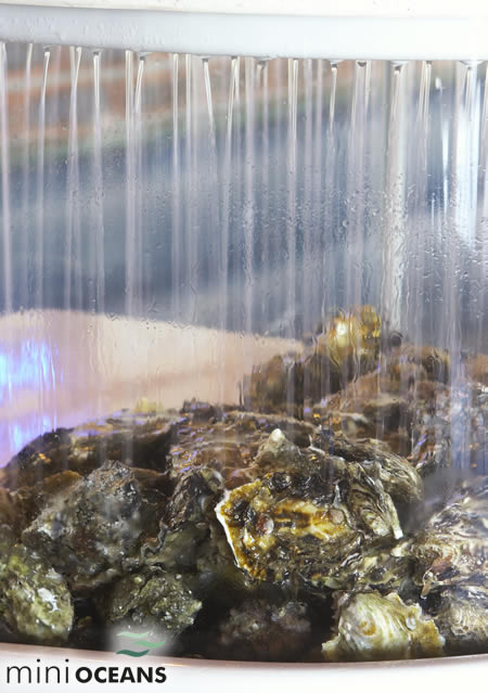 Water Tanks For Sale >> Live Shellfish Display Units / Oyster Tanks
